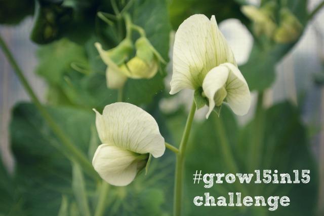 grow15in15blog
