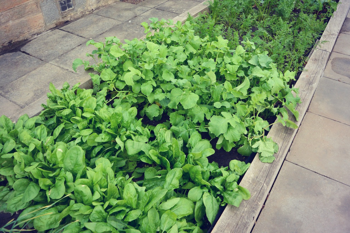 Raised Garden Beds Potato Sacks