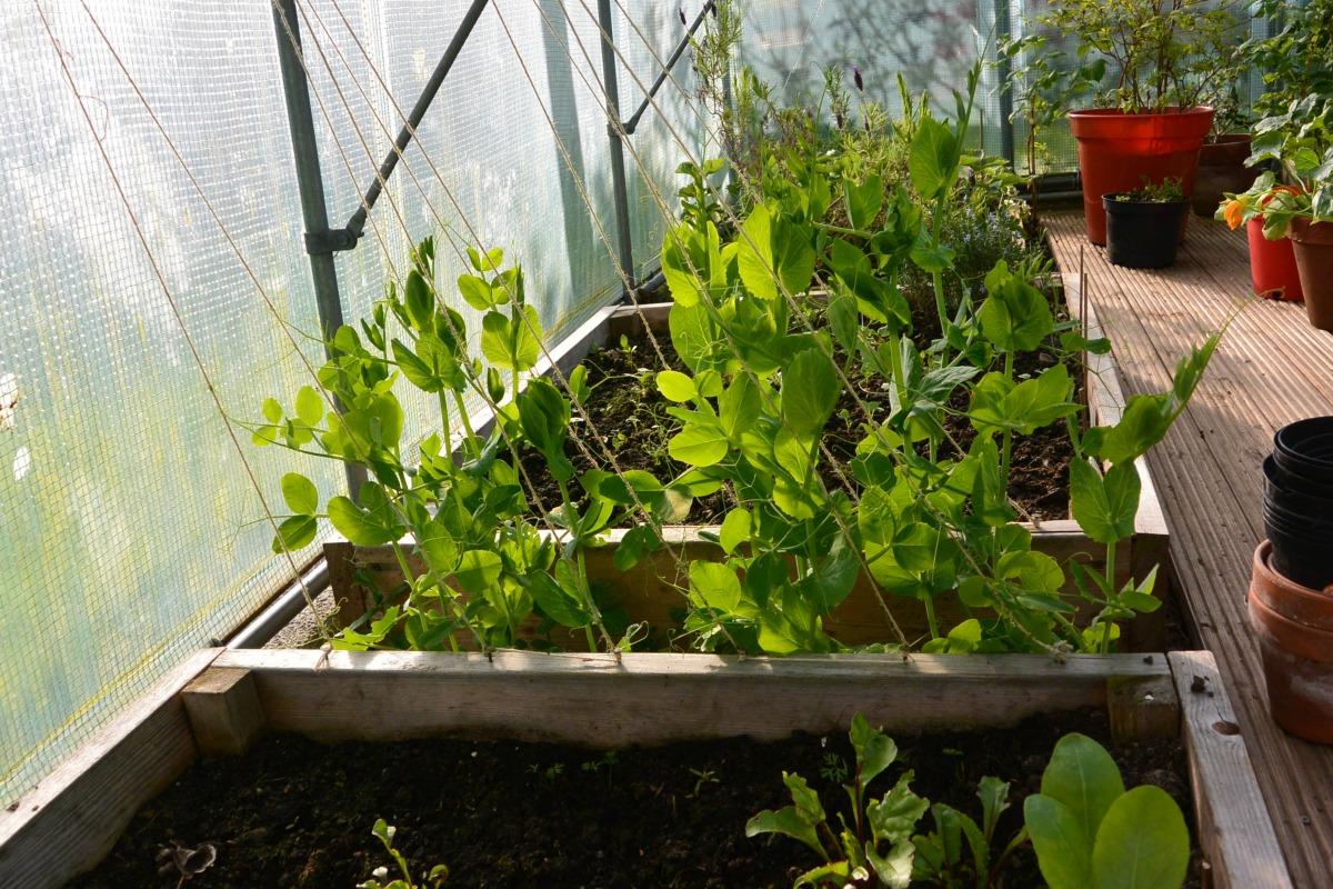 Growing My Shetland Garden